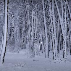 Зимова графіка...