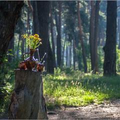 Лісовий натюрмортик!
