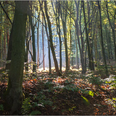 Вересневий ліс