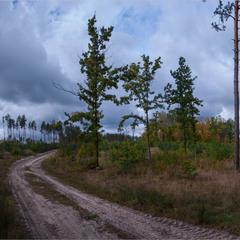 Поліська осіння панорамка.