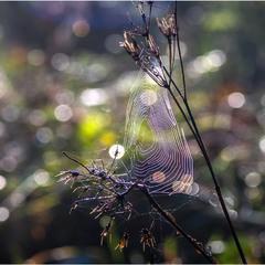 Боке + павутинка = картинка