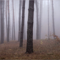 Народження туману...