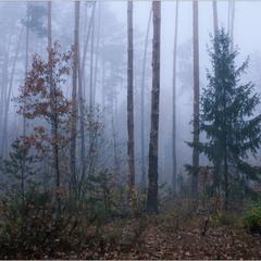 Лісовий туман -це як сауна для їжаків!