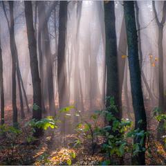 Осінній лісок...