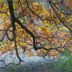 Поліська осіння