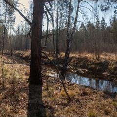 Лісова річечка