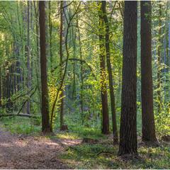 Панорамка весняного лісу