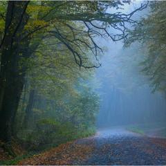 Я чую шелест опадаючого листя у ранковому тумані