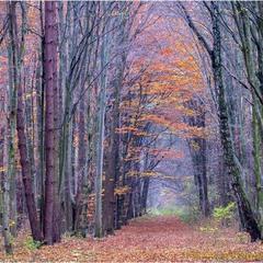 Барви осіннього лісу