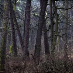 Аромат соснового лісу