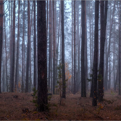 Осінній лісок...II