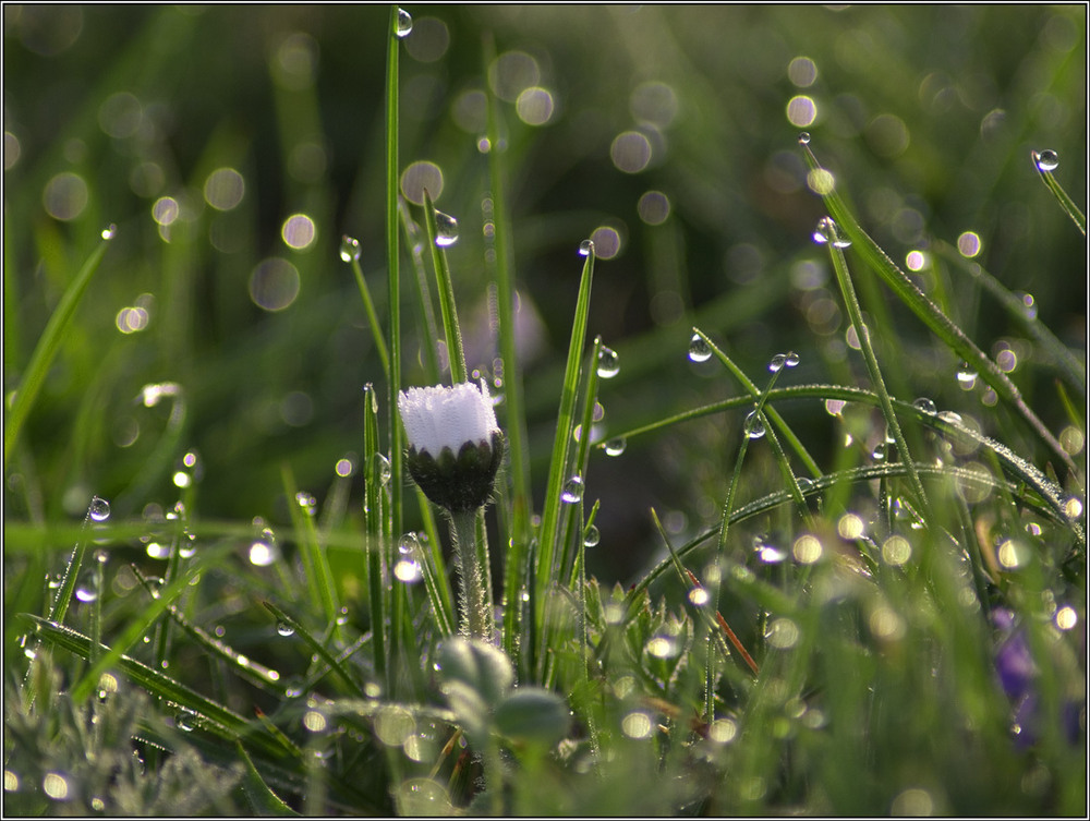 Красивые картинки травы после дождя