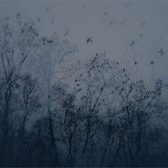 Вороны...