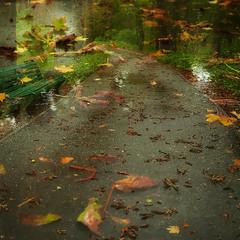 Осень. Листопад...