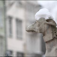 Снігова шапочка
