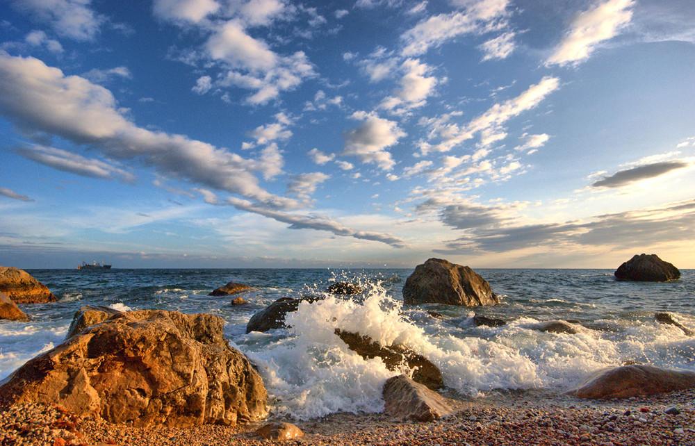 Морские обитатели черного моря фото попадание пыли