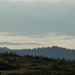 Карпатські велетні під  ковдрою( туманною)