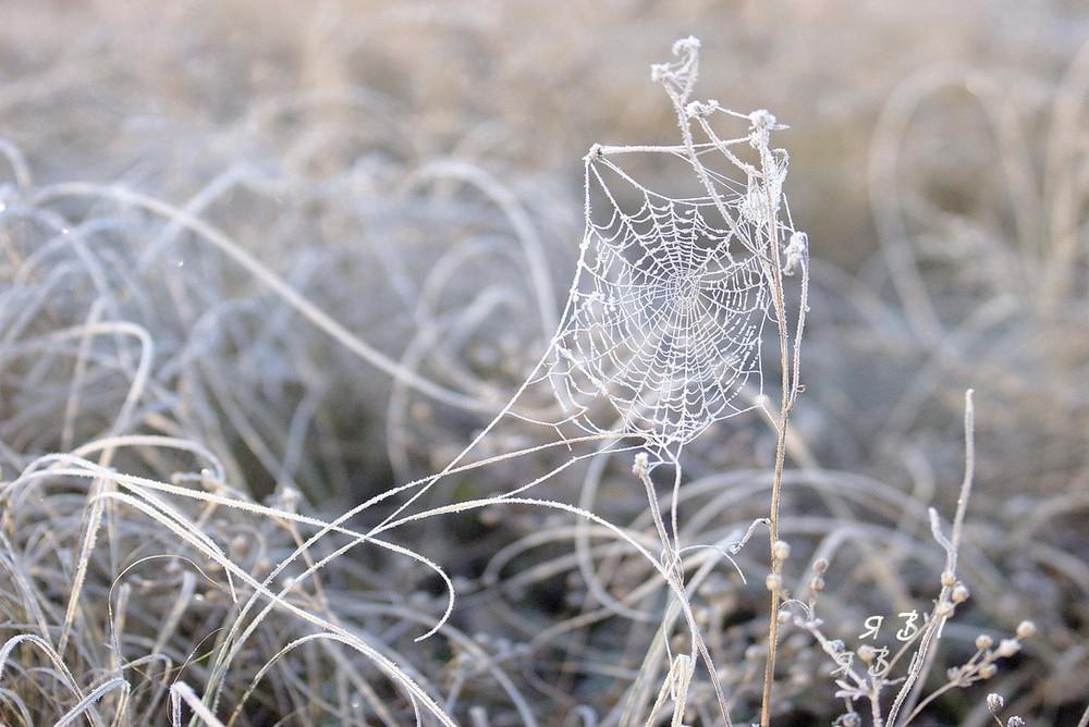 фото зимней паутинки картинка доступна для