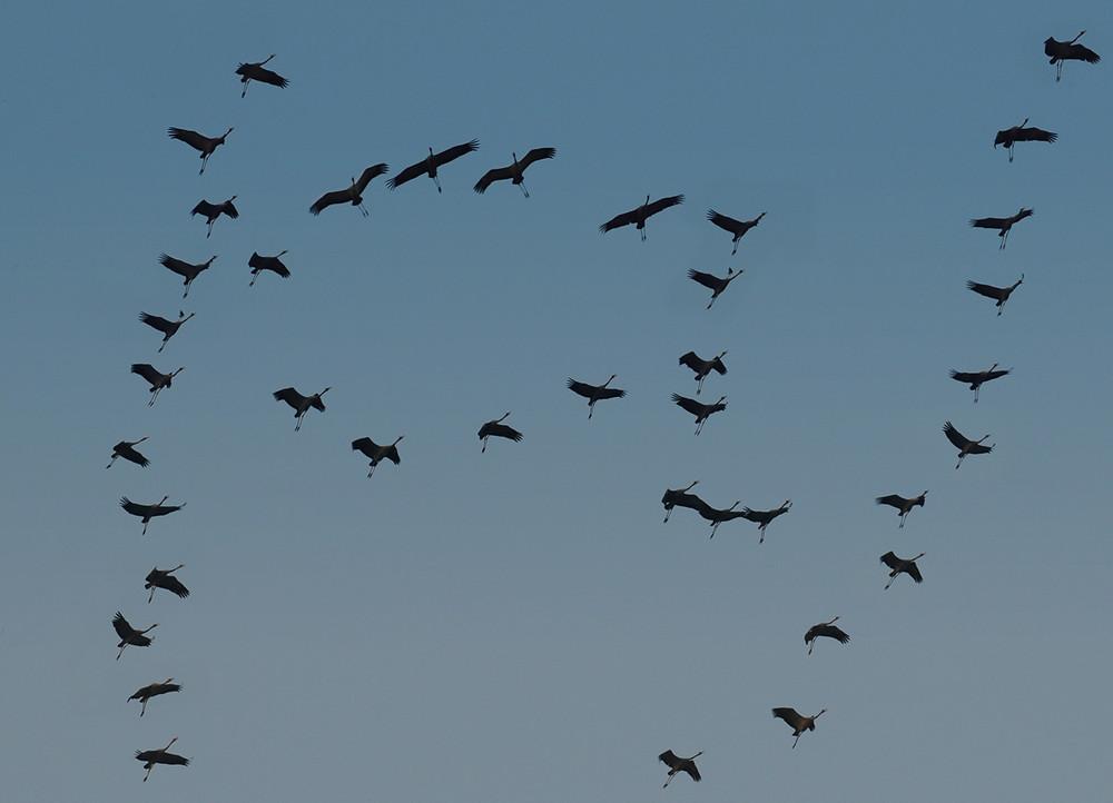 основе болезни виды перелетающих птиц фото чему приводит отсутствие