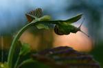 Пригоди равликів | Adventures of Snails  №5