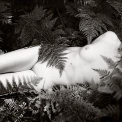 Forest abandon