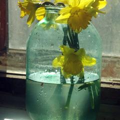 Весна в трехлитровой банке…