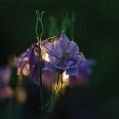 цветение уходящего дня