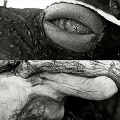 черепаха Зігмунд