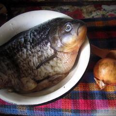 Про грустную рыбу