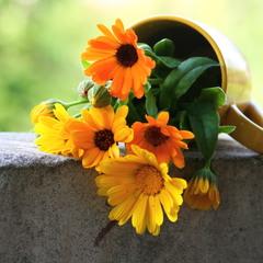 С жёлтыми цветами