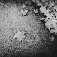 Фантазия.Снежные листья.