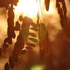 осень в золотОм...