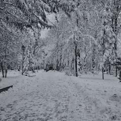 заснеженный декабрь