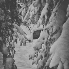 снежная...настроенческая. ..