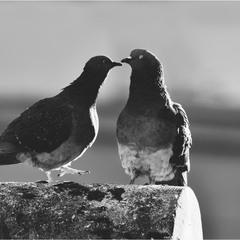 в полушаге от любви
