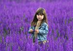 В фиолетовом поле
