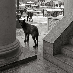 пес в городе