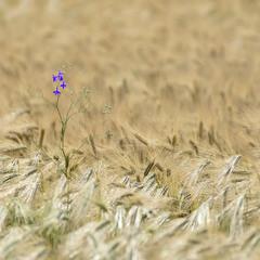Один в поле