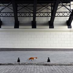 пространство и кот