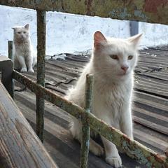 Одесские белые