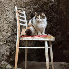 кошка и стул