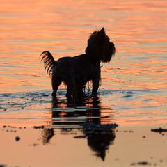 Собака море закат