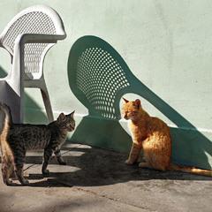 В тени от стула