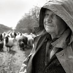 добрый пастух