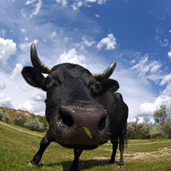Коровка с Куяльника