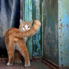 портрет кота