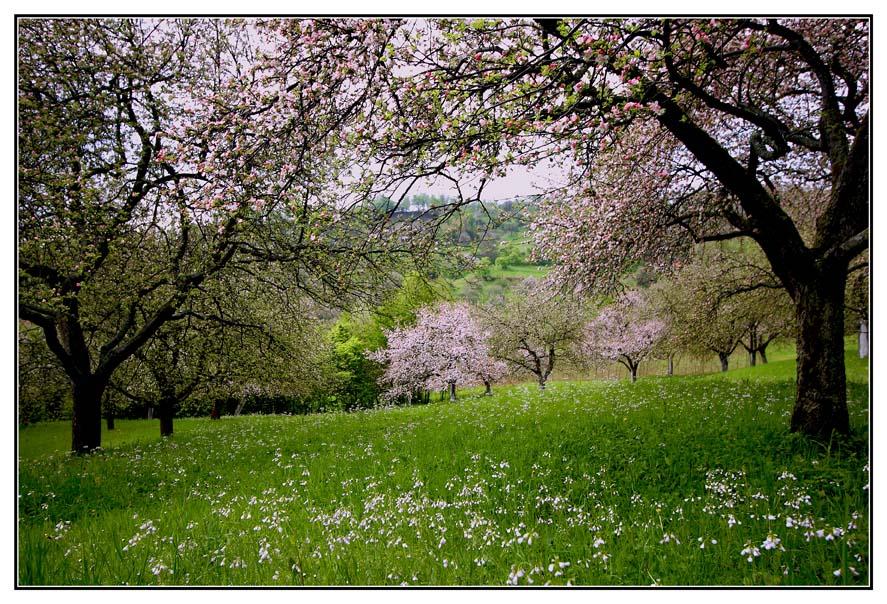 нашей картинки когда цветут сады башмет