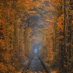 """Осень в """"Туннели любви""""."""
