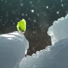 Аномальна зима