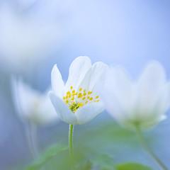 Новая весна